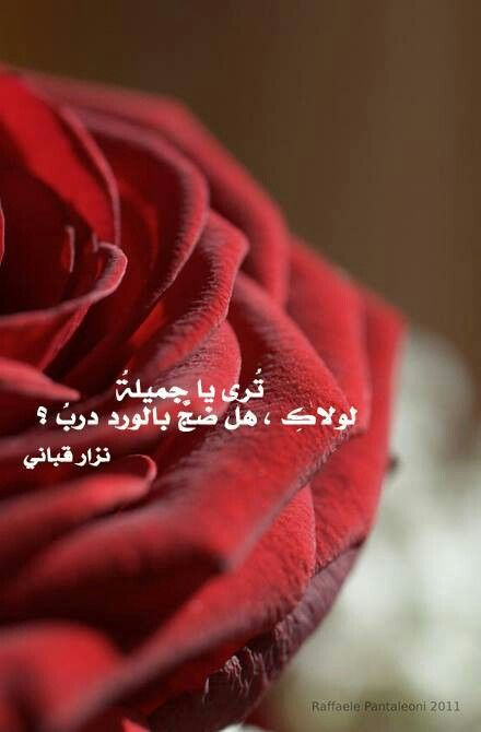 لولاك Emotional Photos True Words Best Love