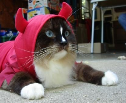 charlie in kmart cat halloween costume totally ghoul devil pet costume - Halloween Costumes For Kittens Pets