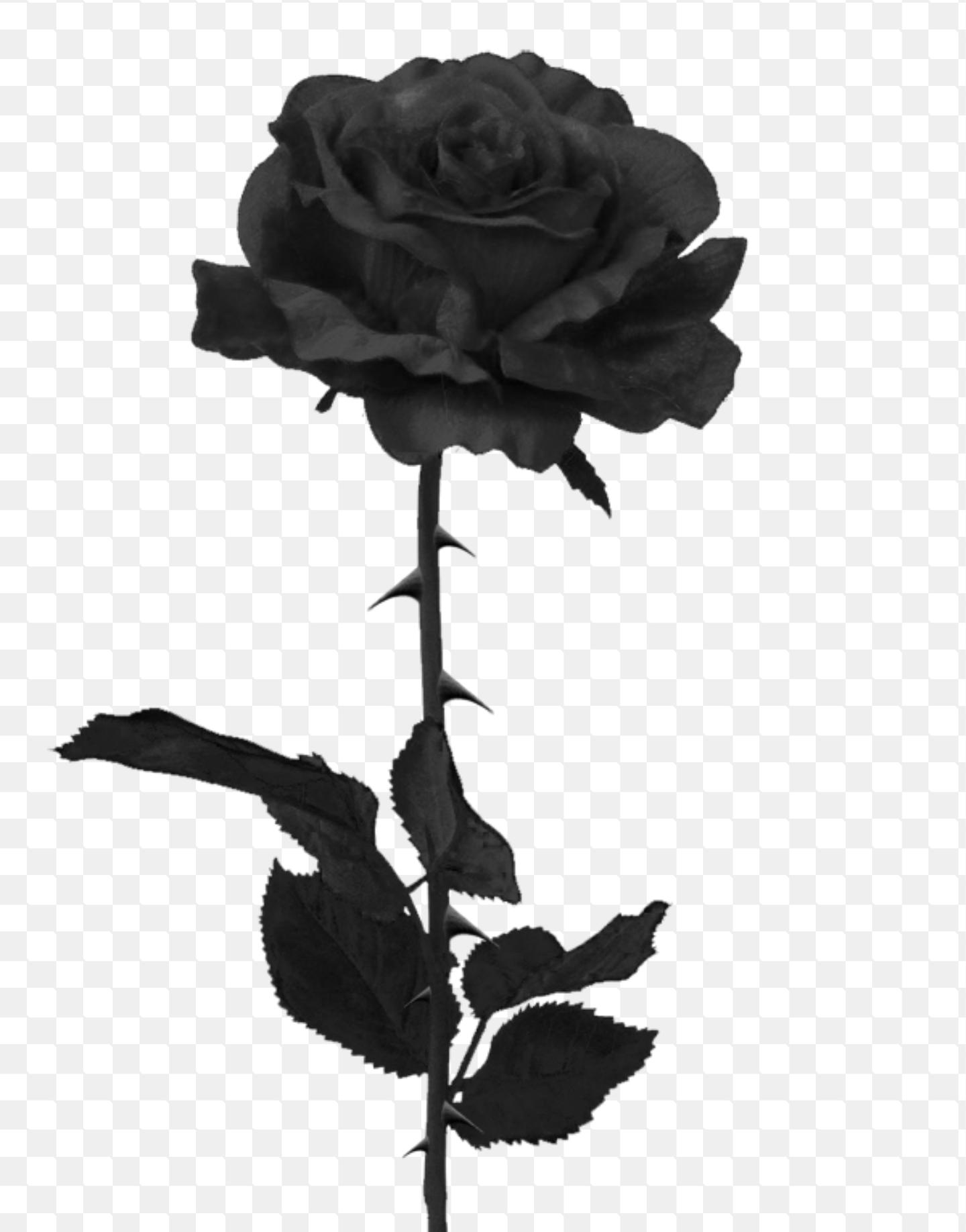 Black Rose Black Rose Tattoos Single Rose Tattoos Rose Thorn Tattoo