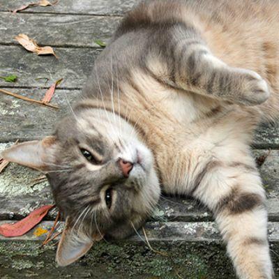 serene cat