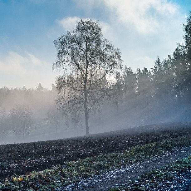 #Nebel #fog #baum #tree #franken #franconia #oberfranken #sonnenstrahlen #sunbeams #sonnenaufgang #sunrise #srs_nature #nordbayern #nature_perfection #world_bestnature #naturehippys #nature_up_close #naturelove_world #deinbayern #igersgermany #igersbavaria #heimatliebe #br_franken by belipictures