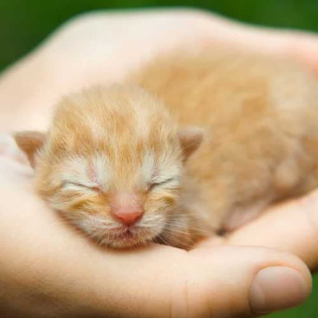 Kitten Newborn 1 Day Newborn Kittens Kitten Cute Animals