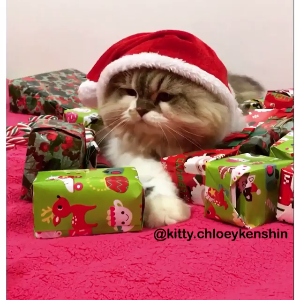 When you don't want to share the presents... (IG kitty