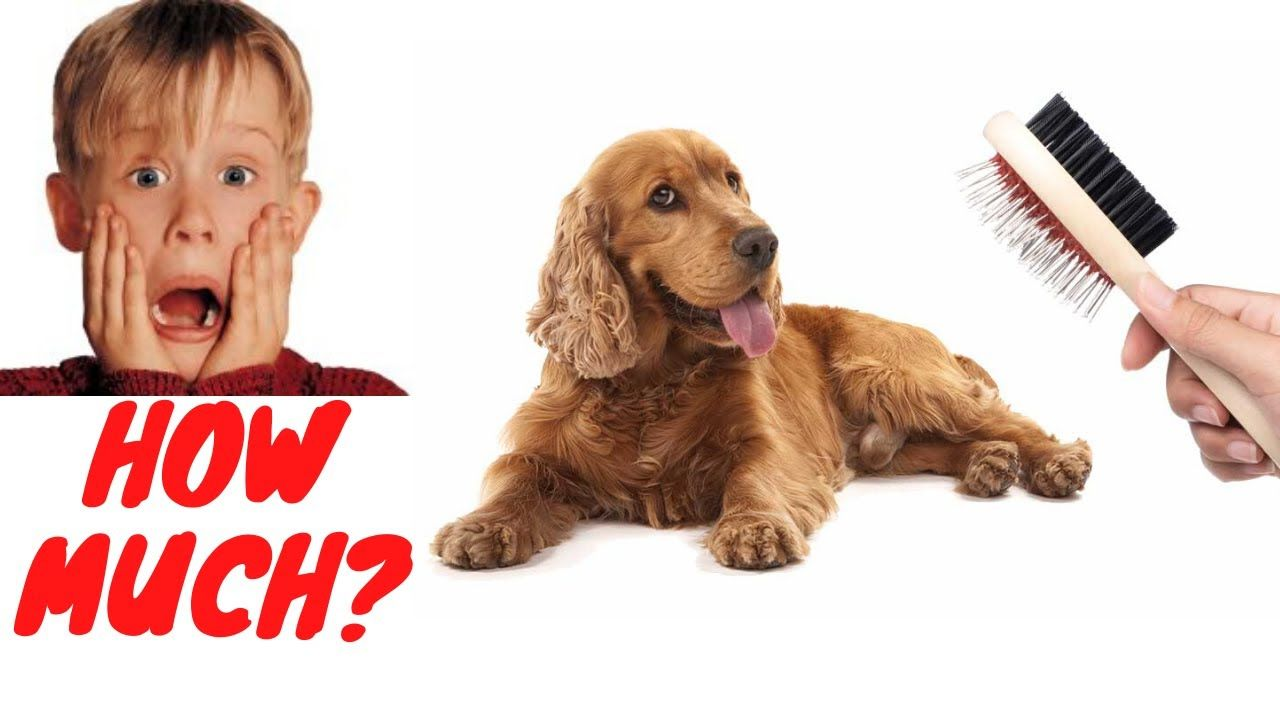 How Much Do Cocker Spaniels Shed? | Cocker Spaniel ...