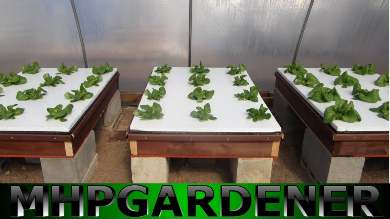 Hydroponic Lettuce Experiment Comparing Water Soluble 640 x 480