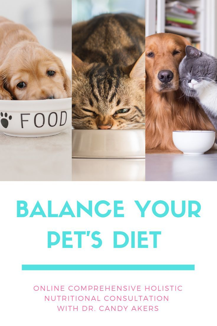 Are you confused about pet food these days? You're not