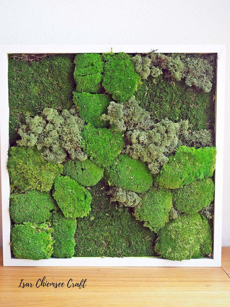 Diy Moosbild Selber Machen Moosbilder Mooswand Garten Pflanzen