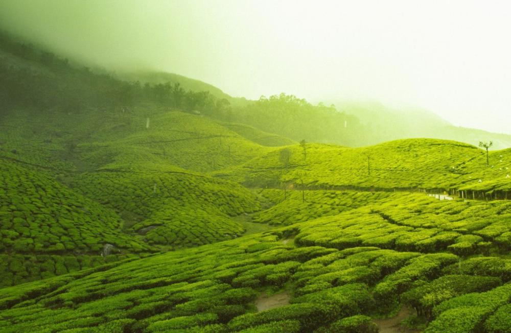 Beneficios del Té verde Video in 2020 Tourist places