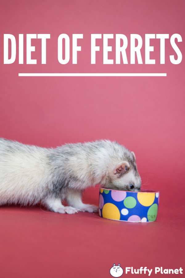 Can Ferrets Eat Popcorn & Cereal?
