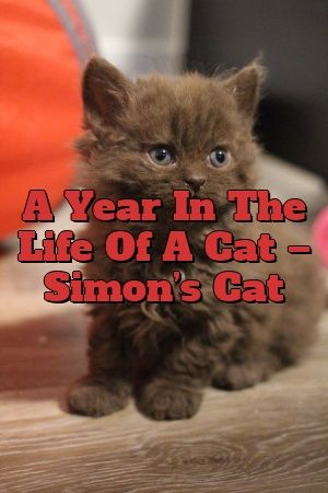 Fiona Gibson Tells About A Year In The Life Of A Cat – Simon's Cat  #australianmist  #pets  #cute  #love  #lovecats  #Kittens  #Cats  #Tabby