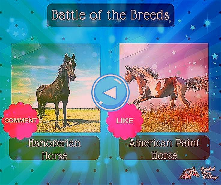 Hanoverian Horses of the Breeds Vote for your favorite COMMENT for Hanoverian Horses or L  Battle of the Breeds Battle of the Breeds Vote for your favorite COMMENT for Ha...