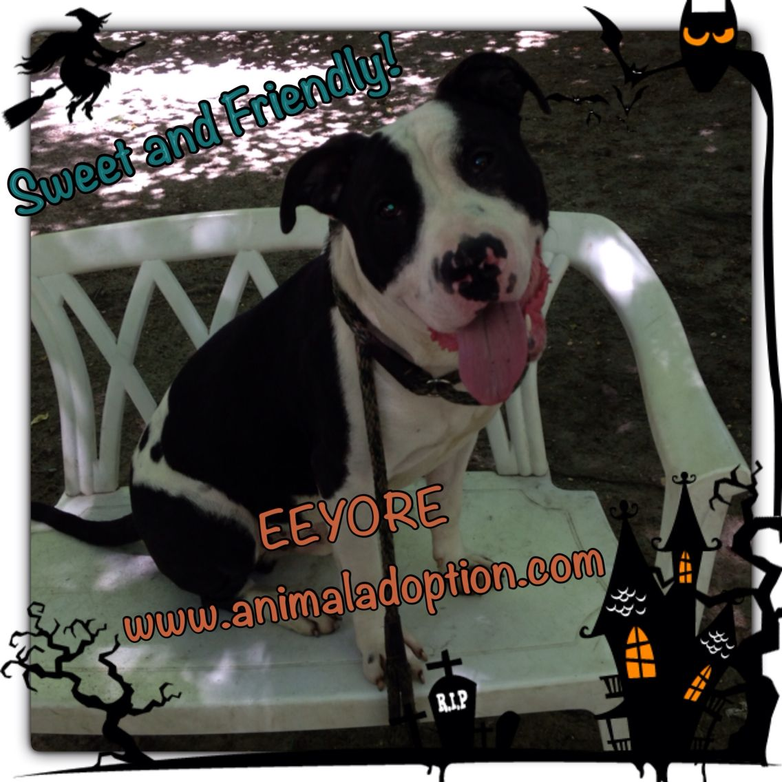 Eeyore is in a shelter and needs a family ️ Animal