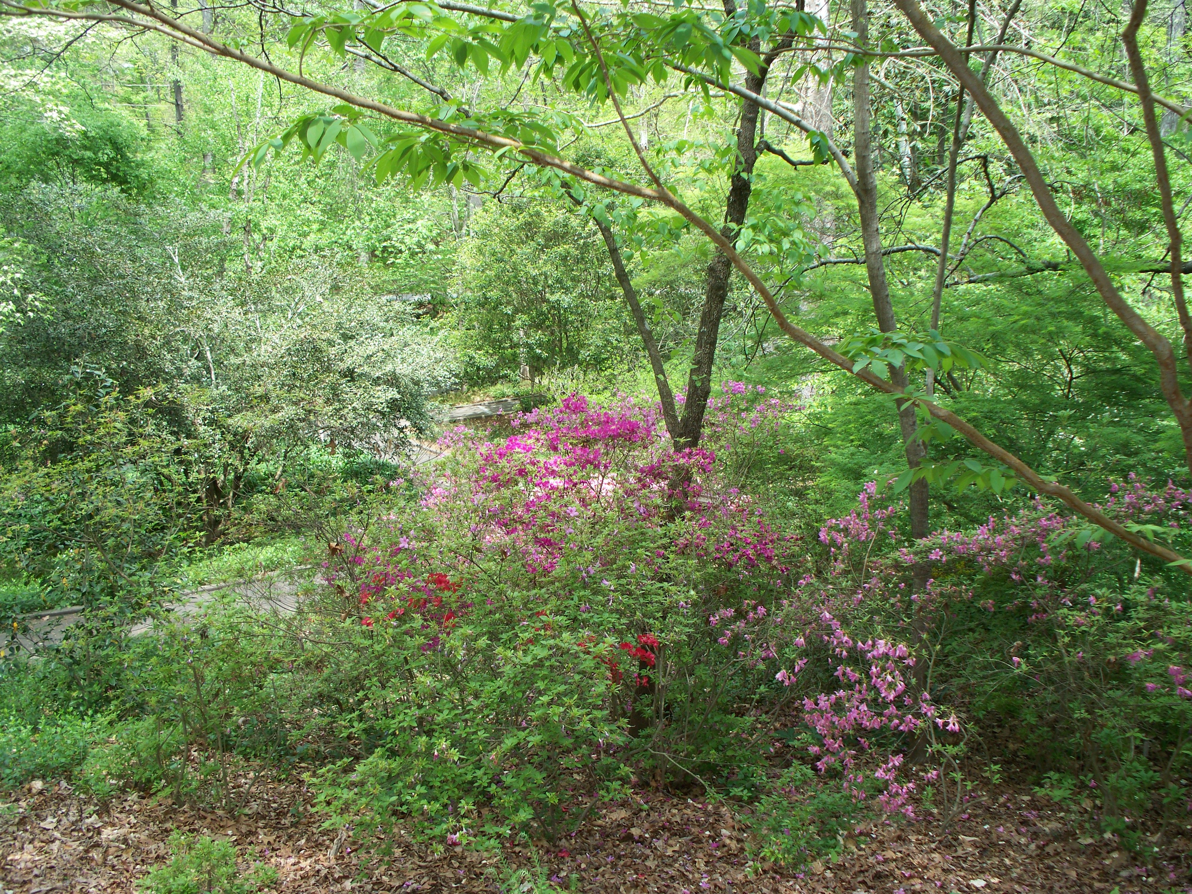 Botanical Gardens/Athens, Ga.