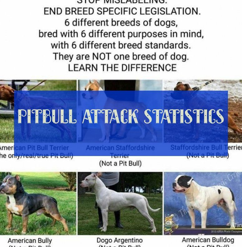 Pitbull Attack Statistics Pitbull Dogs