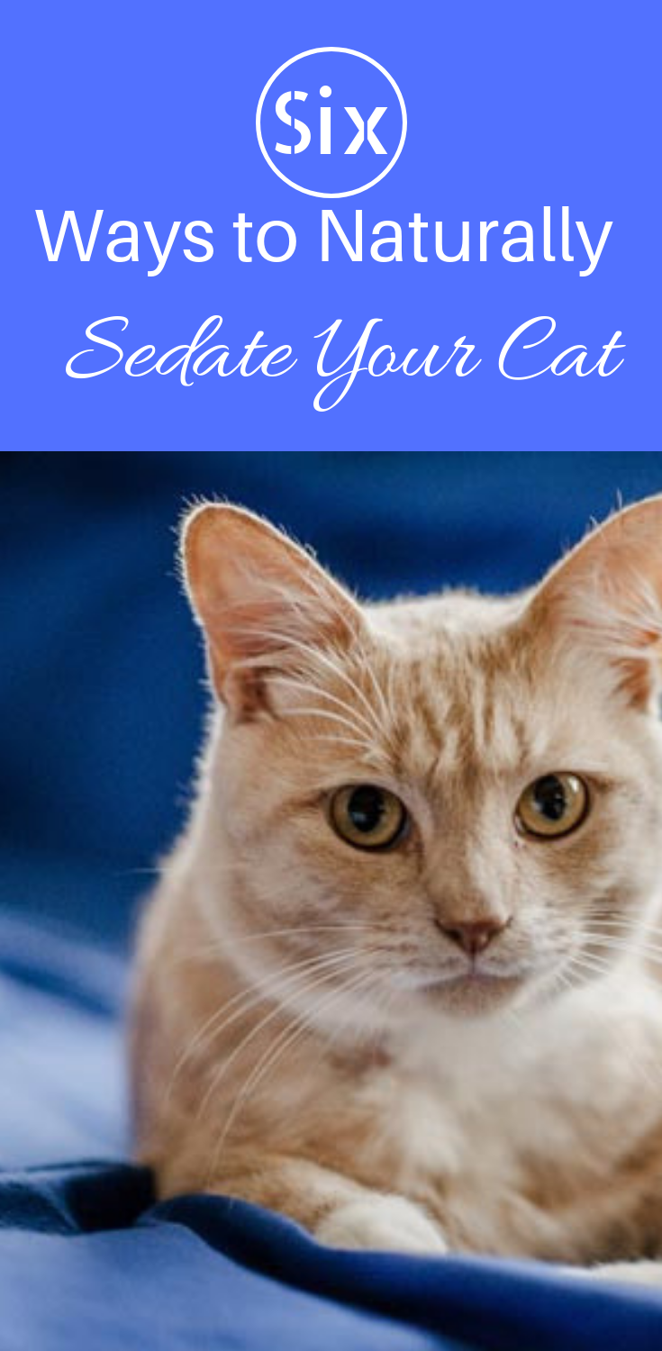 Six Ways to Naturally Sedate Your Cat Cat travel