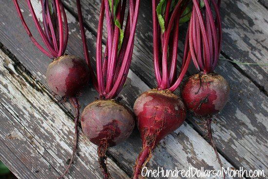 How To Grow Beets Start To Finish Companion Planting 400 x 300
