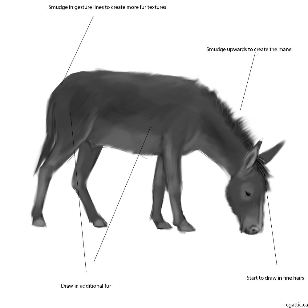 How To Draw A Donkey Step 3: Smudge Everything In With A Chalk Tip