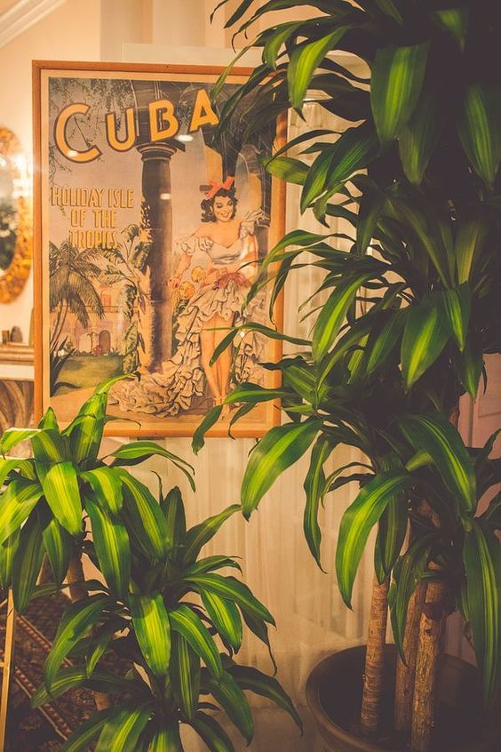 Cuban Decor On Pinterest Cigar Lounge Decor Caribbean Decor And