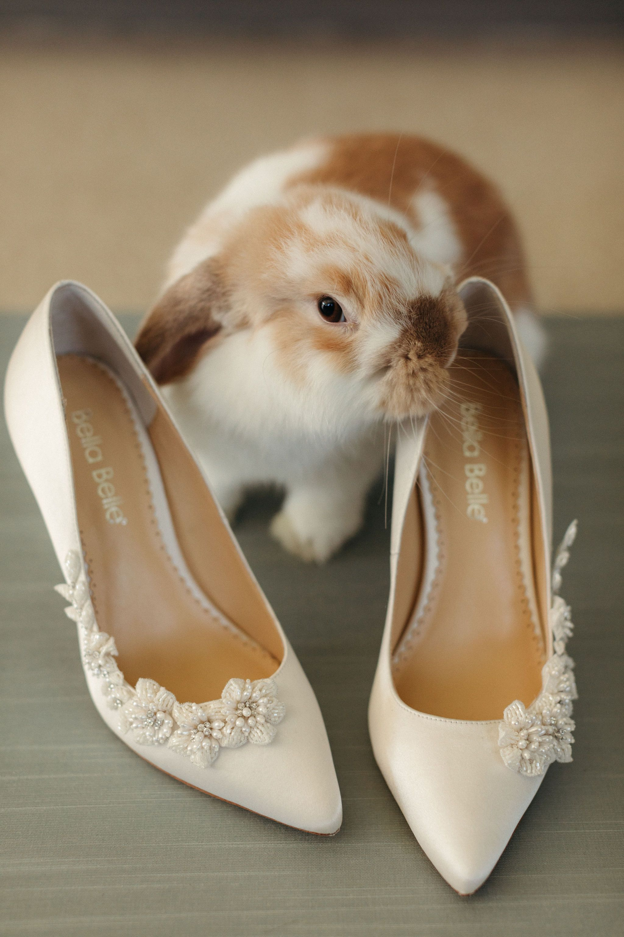Pin On Inspiration Pets At Weddings