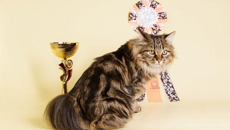 Cat Videos Cattime Cat Gif Cats Long Cat