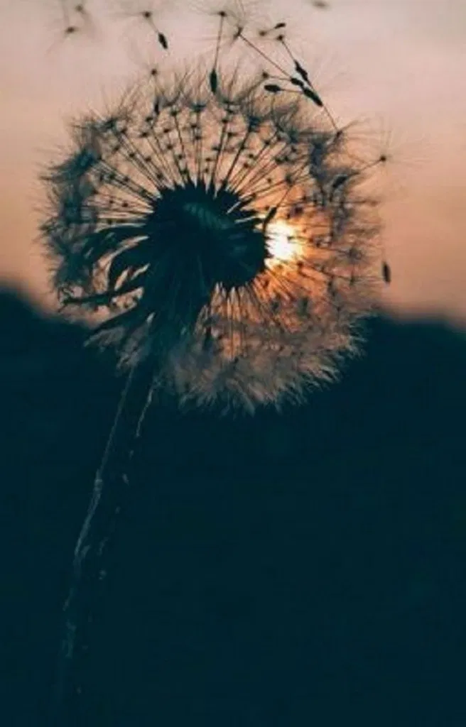 20 The New Most Popular Christmas Wallpapers For Iphone Backgrounds Allhous Allhous Com Christmasw Dandelion Wallpaper Hipster Wallpaper 7 Plus Wallpaper