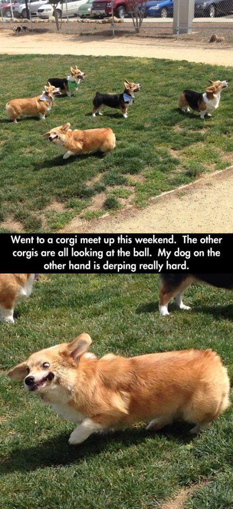 Super Clean Funny Memes (20 Pics) Funny animals, Funny