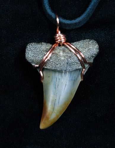 Perfect Bone Valley Megalodon Tooth Necklace