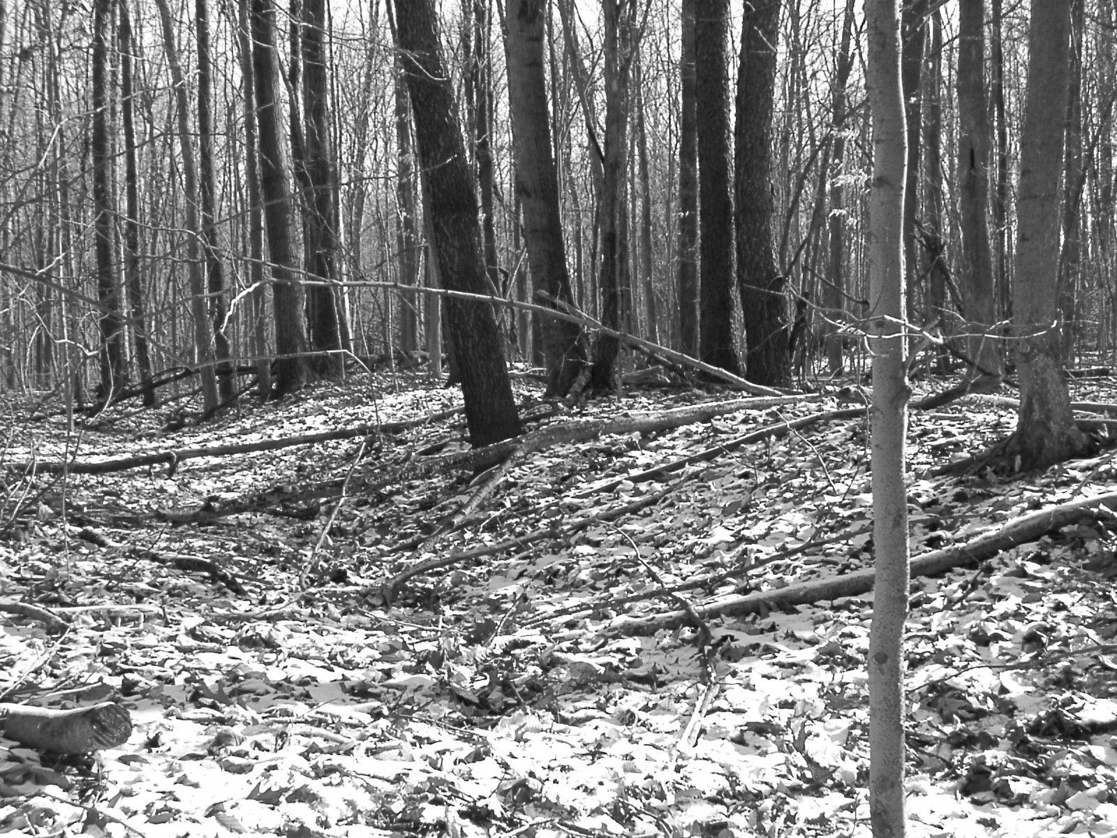 native american burial mounds | Mound Builders: Indiana