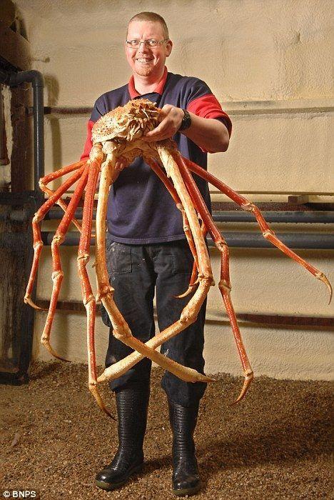 Rey de reyes de los cangrejos !!! | Naturaleza | Pinterest | El ...