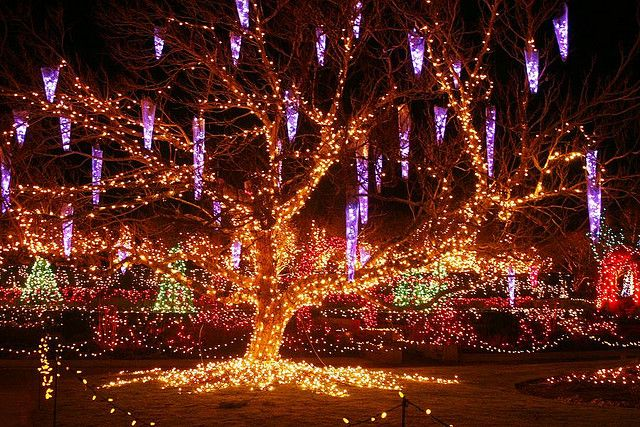 Van Dusen Botanical Gardens Christmas Lights