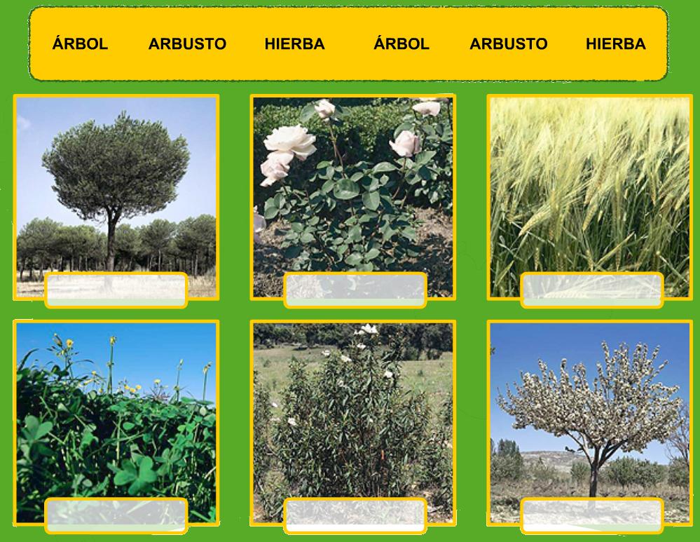 El Blog De Tercero Clasificación De Las Plantas Clasificación De Las Plantas Plantas Arbustos Polinizacion De Las Plantas