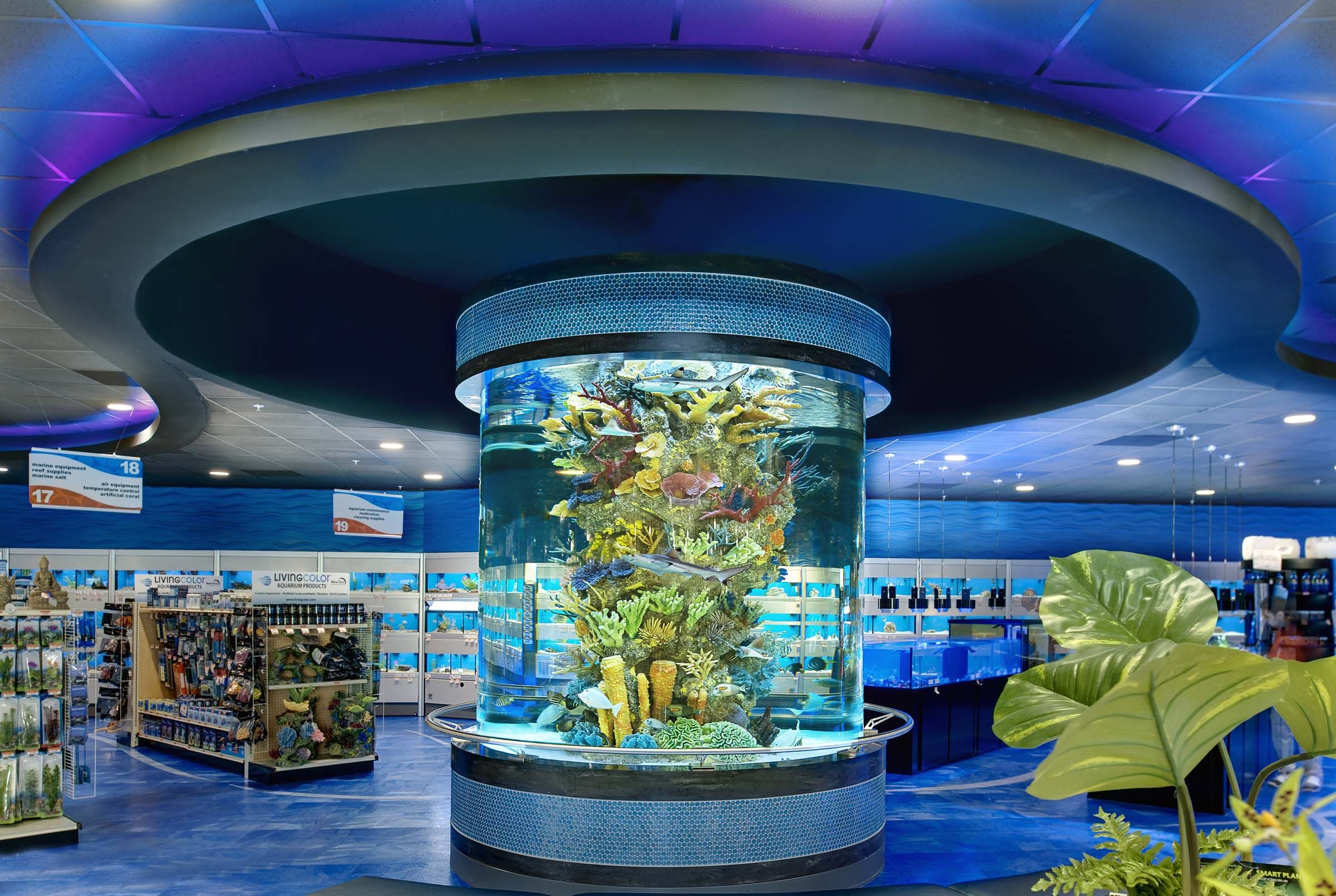 Aquariums - Custom Aquariums Cylinder Acrylic Tank Living Color Aquariums