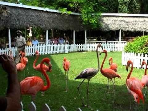 eb4ac110055e556b62396b5650fa8824 - Nassau Bahamas Ardastra Gardens And Zoo