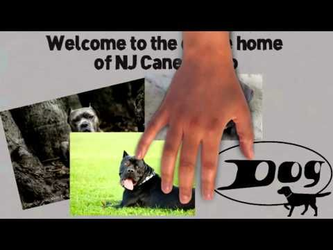 cane corso cane corso breeder cane corso mastiff cane corso for sale cane corso products  http://njcanecorso.com/