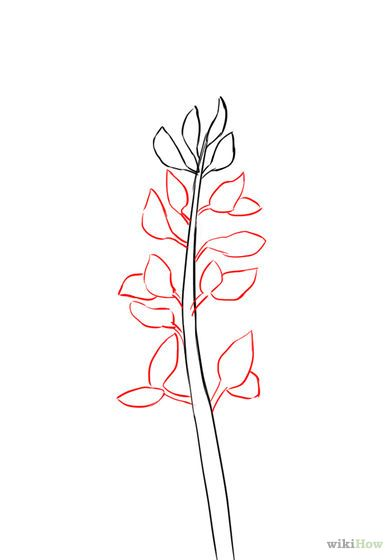 Image result for bluebonnet drawing | Coloring Pages & 0utline ...