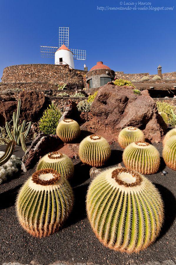 jardin de cactus lanzarote places spaces ii pinterest plantes grasses beaux jardins et. Black Bedroom Furniture Sets. Home Design Ideas