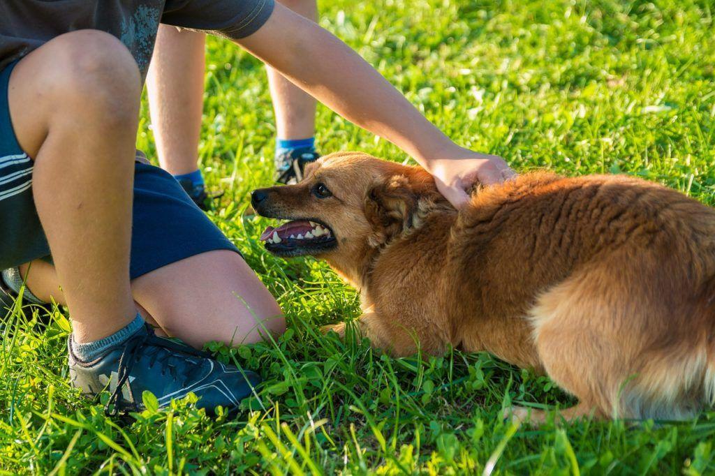 ᑕ ᑐ Hund schnappt nach Kind - Was tun? ++ Ratgeber 2018 ...