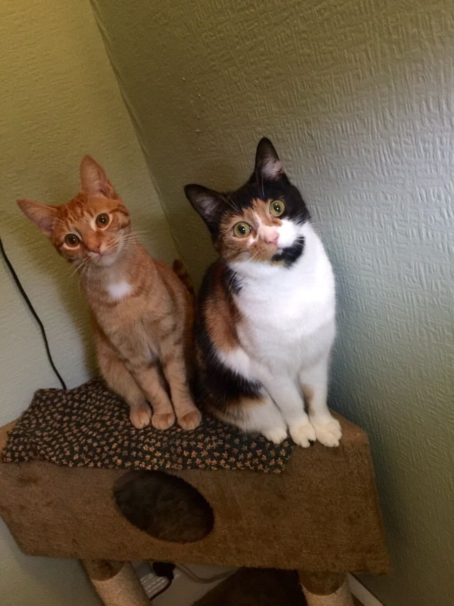 Hey Reddit this is Cheese and Pickle. Looking fabulous