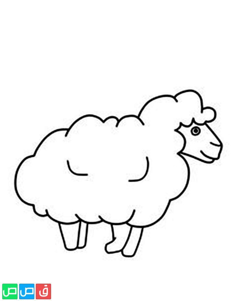 رسم خروف للتلوين Sheep Outline Sheep Drawing Coloring Pages