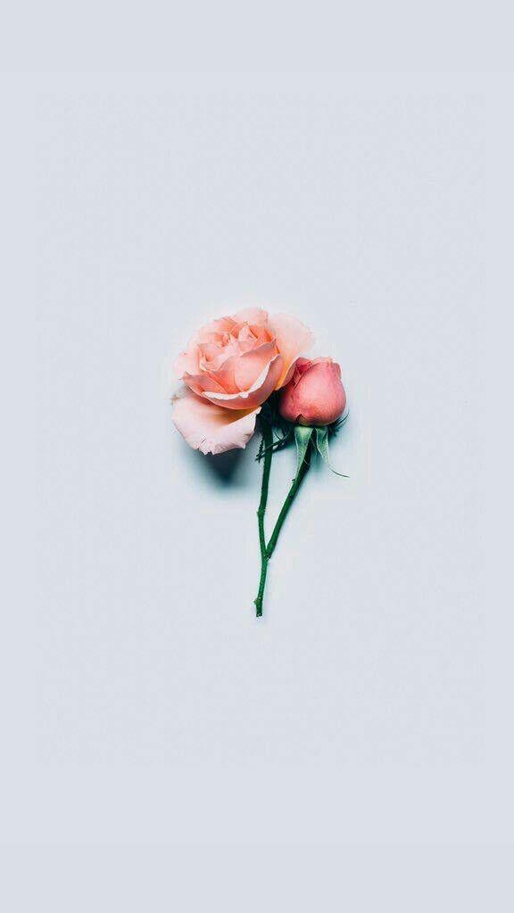 Pinterest Royaltraship Poster Bunga Objek Gambar Latar Belakang