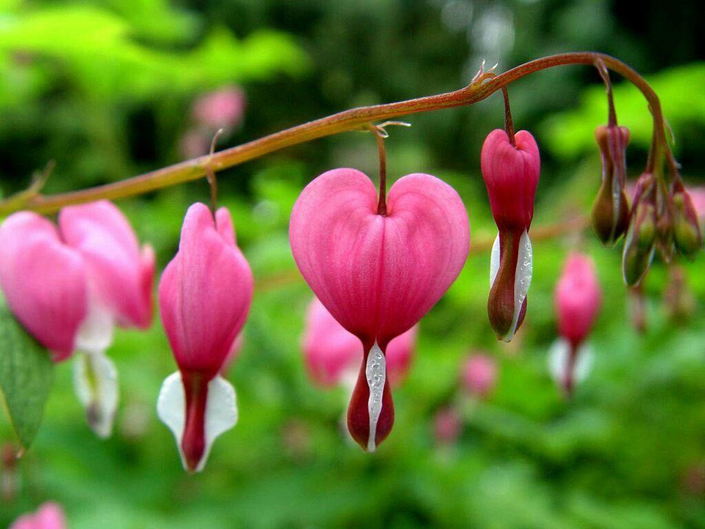 القلب حين ينزف يصبح سامأ جدأ ورد pinterest