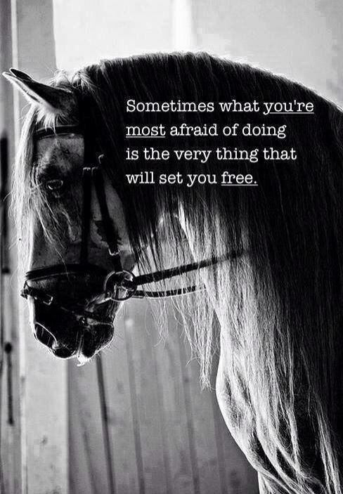 Become Free By Overcoming Your Fears Horse Quotes Inspirational