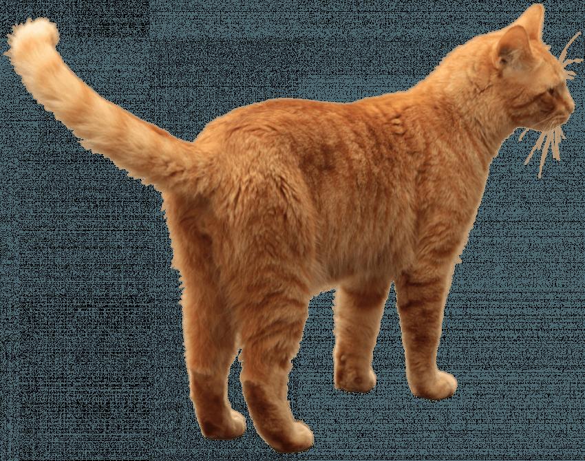 Brown Cat Png Transparent Images Brown Cute Cat Png Transparent Images Cat Get To Download Free Brown Cat Png V Orange Tabby Cats Orange Tabby Cat Colors