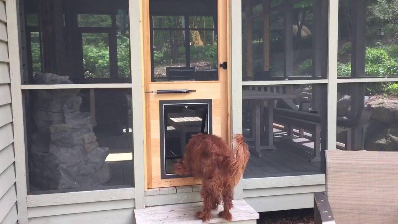Screen Porch Doors Aluminum Httpthefallguyediting