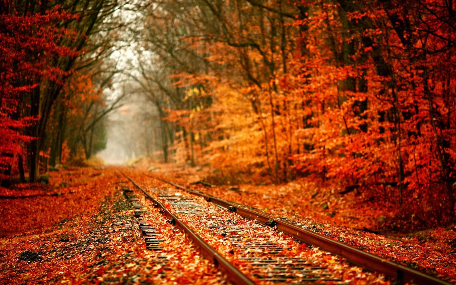 i love autumn - Buscar con Google