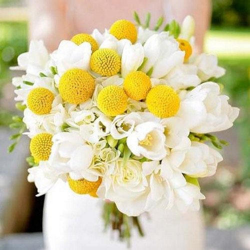 Billy Buttons Flower Seeds Craspedia Globosa 40seeds Etsy In 2020 Spring Wedding Bouquets Yellow Bouquets Wedding Bouquets