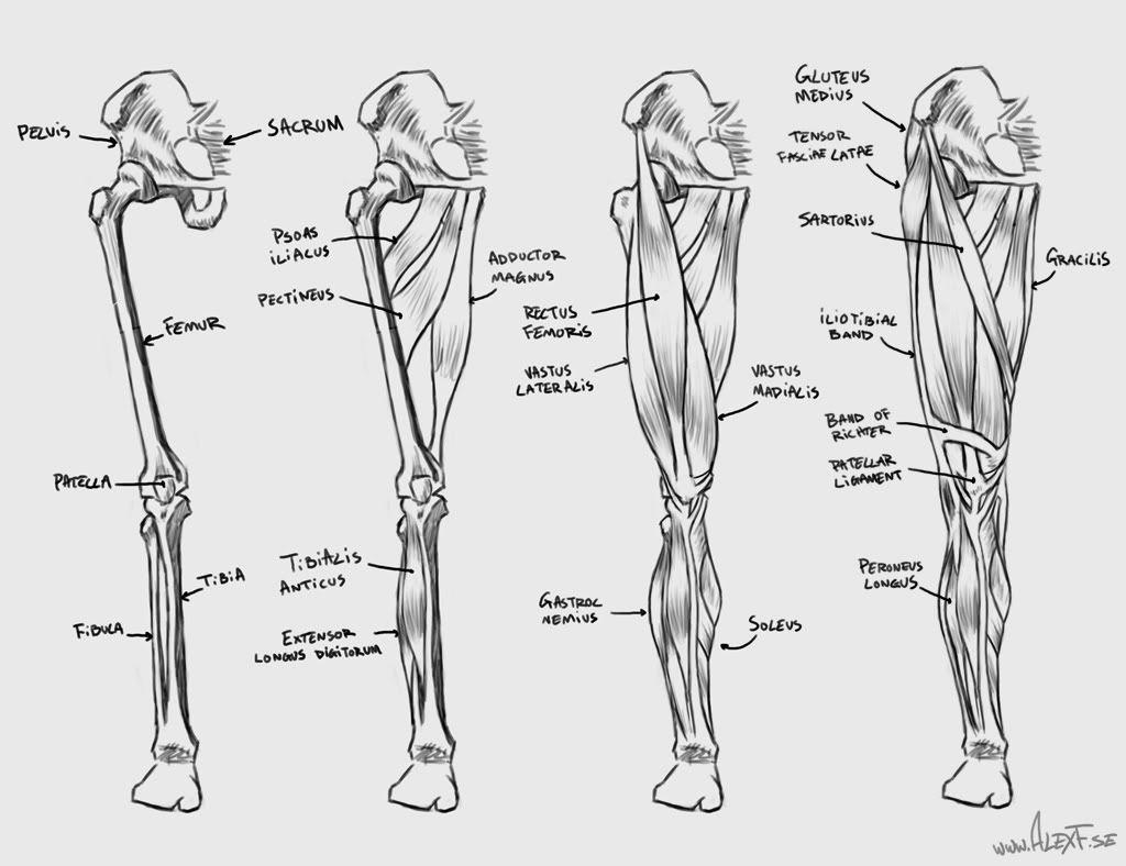 Pin By Jasper Middelberg On Anatomy Book Design In