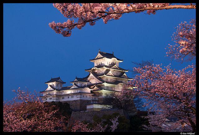 Blue hour sakura at Himeji-jo, Japan By Dan Wiklund via Lonely Planet
