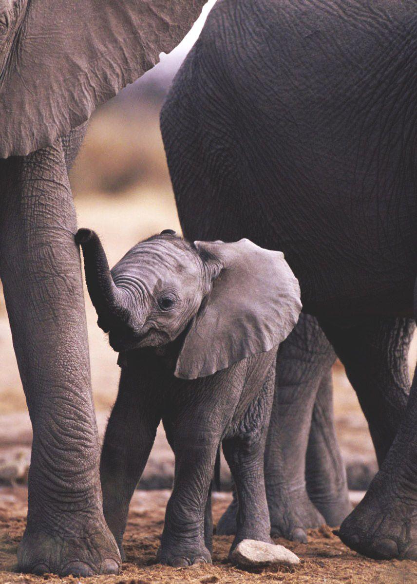 Untitled Elephant Baby Elephant Elephant Wallpaper