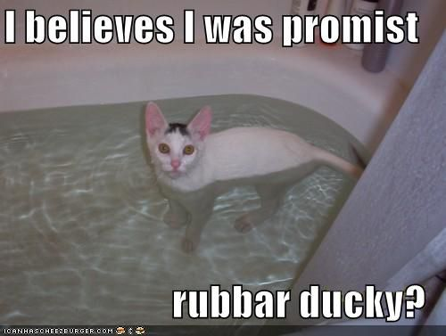Funny Meme To Cheer Someone Up : Funny pictures white cat bath ducky positive attitude cat and